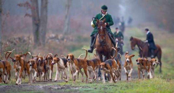 Abattage d'un cerf lors d'une chasse à courre © Le Monde
