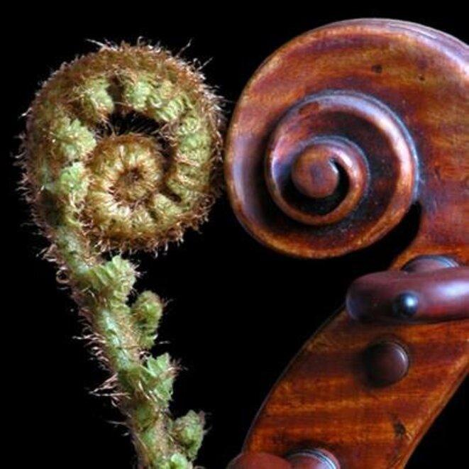 violonplante