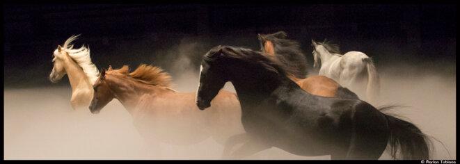 Au théâtre équestre Zingaro, Bartabas rend hommage aux chevaux dans son ultime opus, Ex Anima © Marion Tubiana