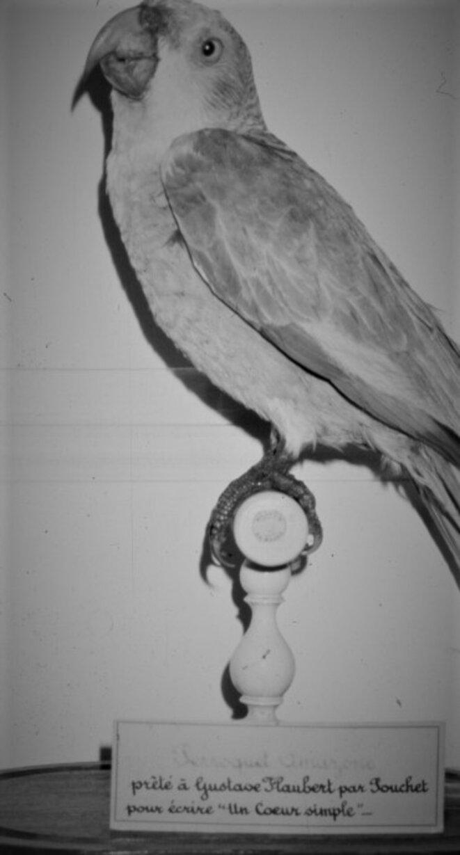 """L'un des """"perroquets de Flaubert"""", Muséum d'Histoire Naturelle de Rouen © Maryline Coquidé, Félix-Archimède Pouchet, professeur de sciences naturelles de Flaubert"""