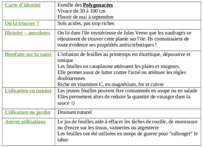 tableau-oseille-des-pres-1