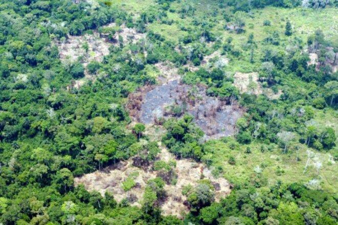 deforestation-rdc-1