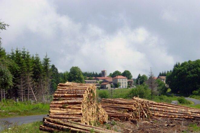 Stemming an invasion: woodpiles in the village of Saint-Éloy-la-Glacière. © Nell van den Bosch