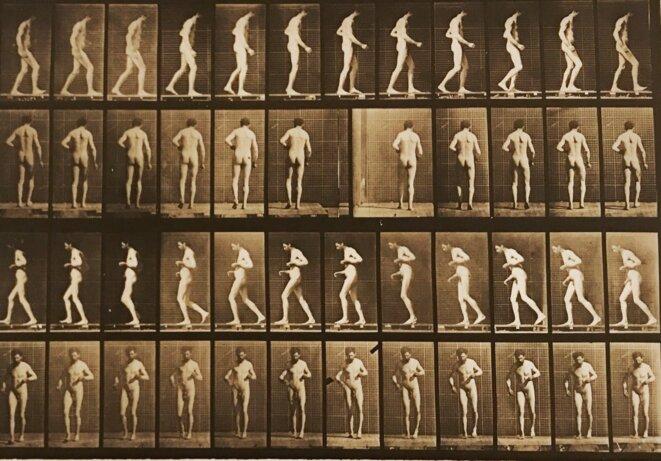 """Edward Muybridge, planche extraite de """"Animal locomotion"""" édité en 1887, Galerie Françoise Paviot, Paris © Guillaume Lasserre"""