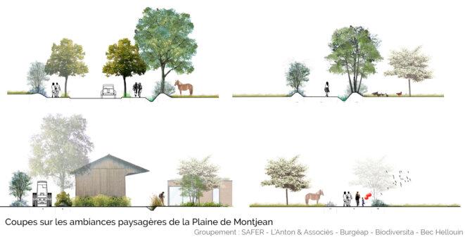 Coupes sur la plaine de Montjean © SAFER / L'Anton et Associés / Burgeap / Biodiversita / Bec Hellouin