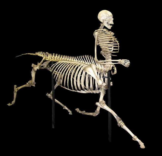 800px-centaur-skeleton