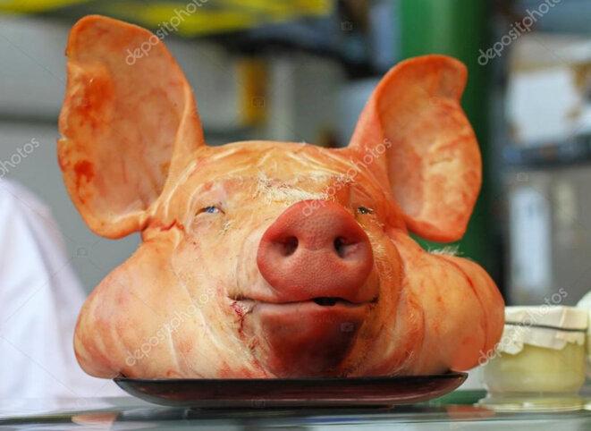 Etats-Unis : des cerveaux de porcs maintenus en vie par des chercheurs