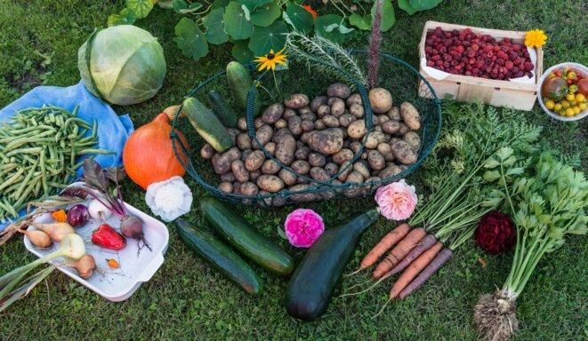 fruit-food-harvest-produce-vegetable-autumn-861521-pxhere-com