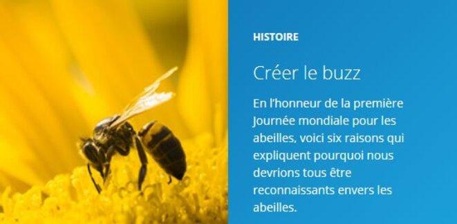 Journée mondiale pour les abeilles © FAO