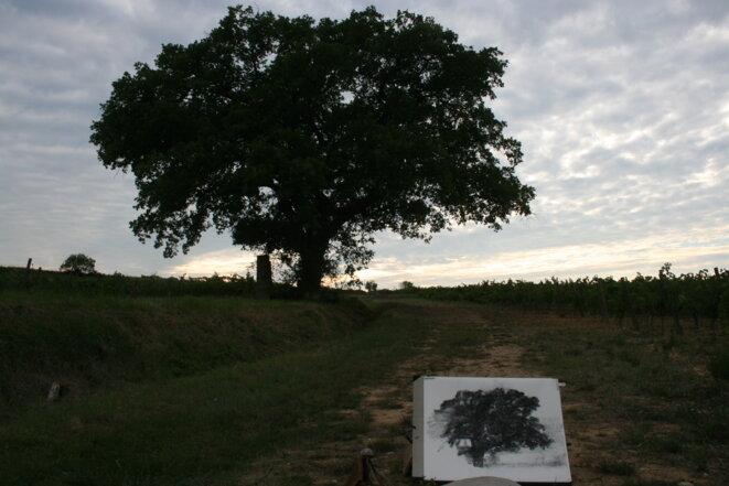 hollan-arbre