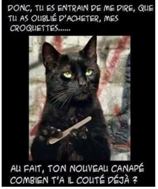 bulle-macron-male-2-le-chat-et-le-canape