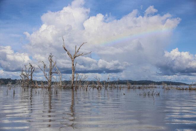 Des arbres morts dans le lac du barrage de Belo Monte. © J.-M. A.