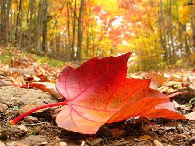 automne-avec-des-feuilles-mortes