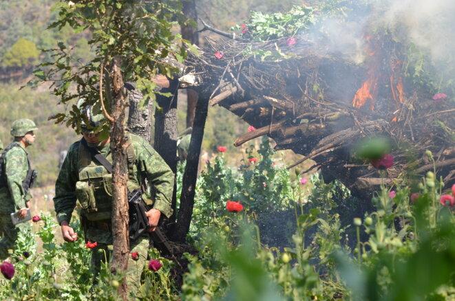 Opération militaire d'éradication de champs de pavot, Etat du Guerrero, Mexique © Clément Detry