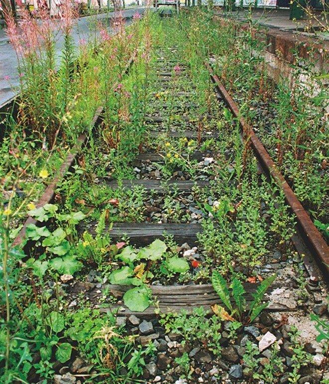 """Lois Weinberger, """"Das über Psslanzen ist eins mit ihnen"""", Photographie,  Documenta X, Kassel, 1997 © Lois Weinberger"""