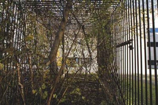"""Lois Weinberger, """"Wild cube"""", 1991/ 2010, fer à béton © Lois Weinberger"""