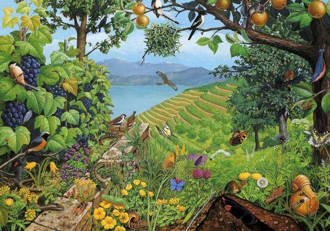 biodiversite-abondance-dessin-copie