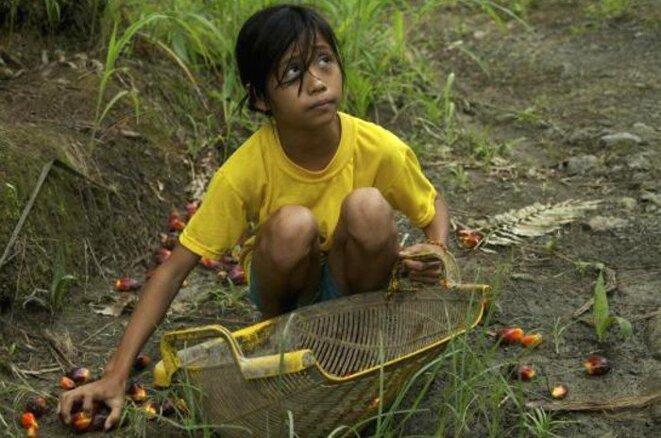 fillette travaillant sur une exploitation de palmiers, Indonésie