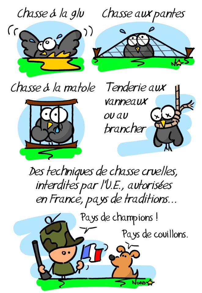 Piégeage «cruel» des oiseaux en France © Norb