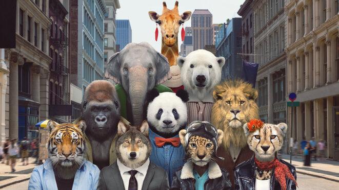 Girafes, pandas, éléphants... les espèces les plus charismatiques sont aussi, paradoxalement, les plus menacées d'extinction. © Zoo Portraits