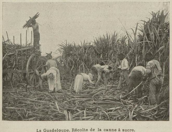 Amarreuses en Guadeloupe © Utopiques