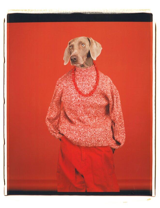 William Wegman, Décontracté, 2002. Avec l'aimable autorisation de l'artiste et de Sperone Westwater Gallery.