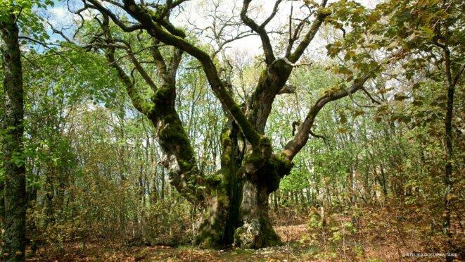 """""""Le temps des forêts"""""""