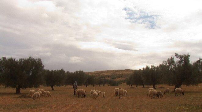 Gatrana, village du gouvernorat de Sidi Bou Zid, hiver 2015 © Photo A.O.