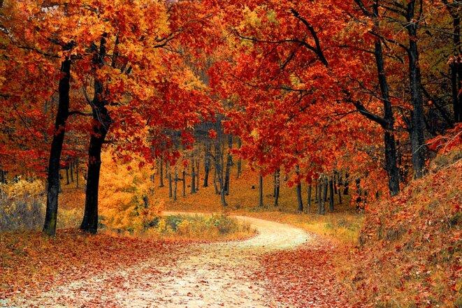 fall-1072821-960-720