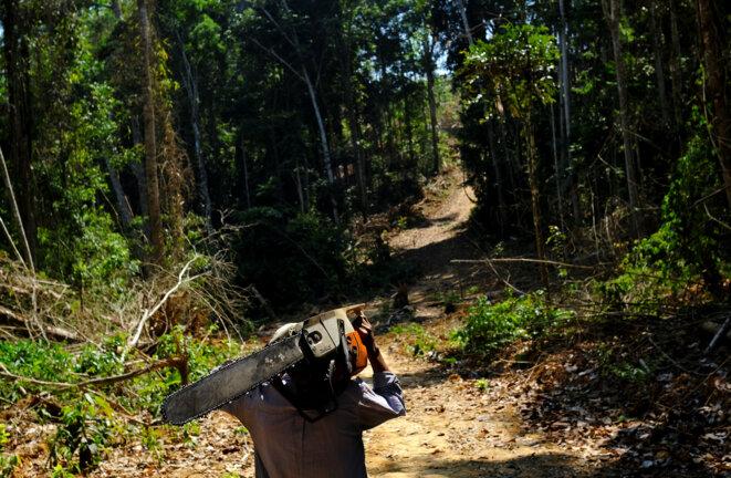 Avec Bolsonaro, la déforestation pourrait repartir de plus belle. © Reuters