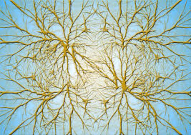 Les neurones dans le cerveau font des nœuds au cerveau