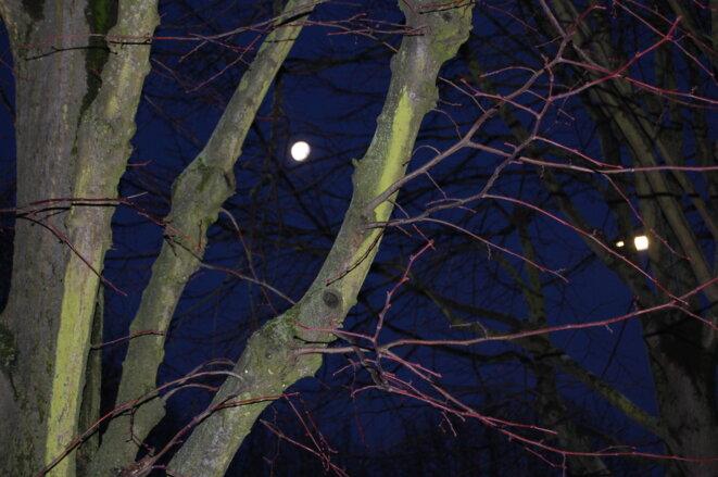 arbre-et-lune