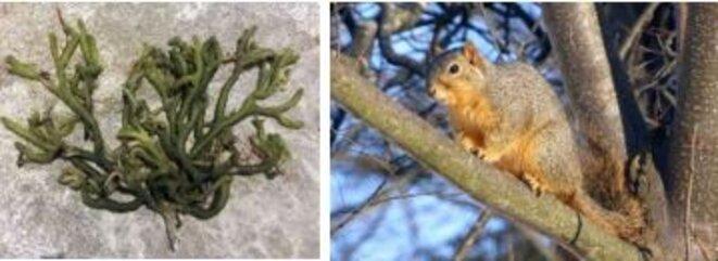 algues-ecureuils