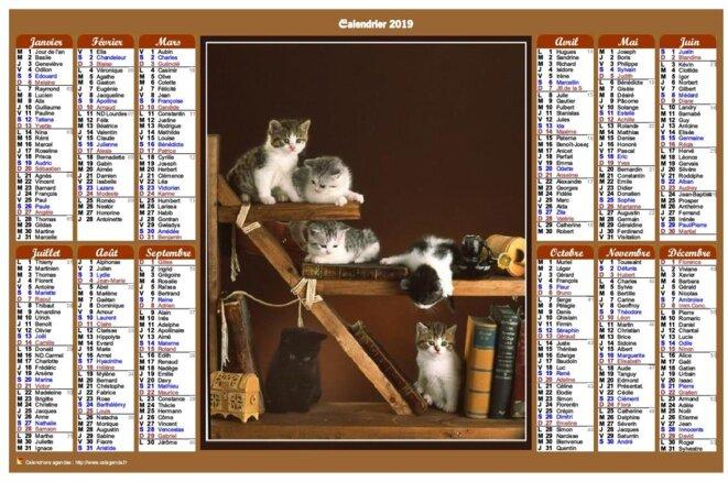 calendrier-annuel-chats-colonnes