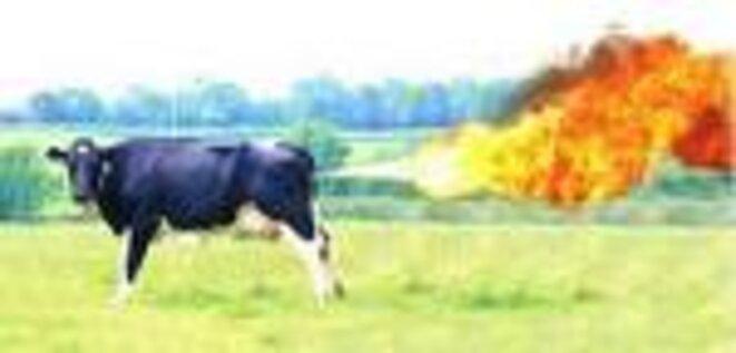 pet-de-vache