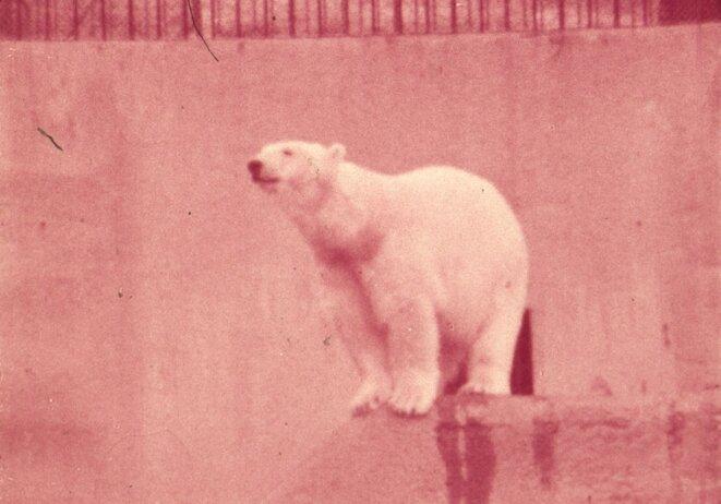 """Lydie Jean-Dit-Pannel, """"L'ours polaire"""", photographie couleur tirée d'un film super 8 malade, 150 x 104 cm, 2018 © Lydie Jean-Dit-Pannel"""