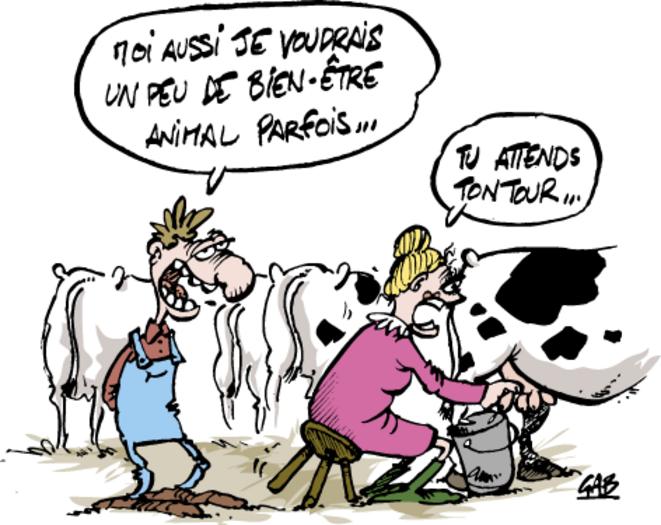 lv-bien-etre-vache