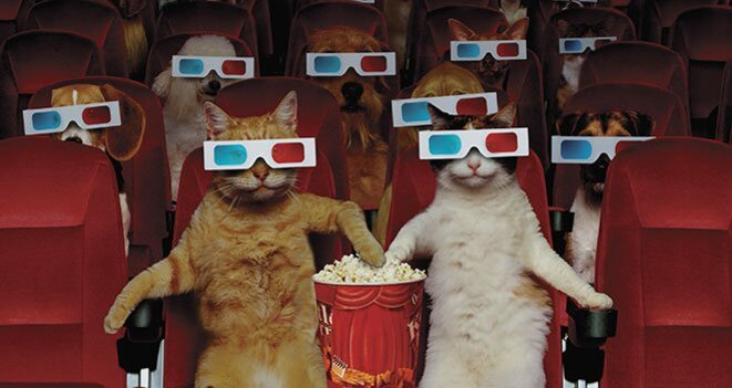 chat-cinema-pop-corn-large