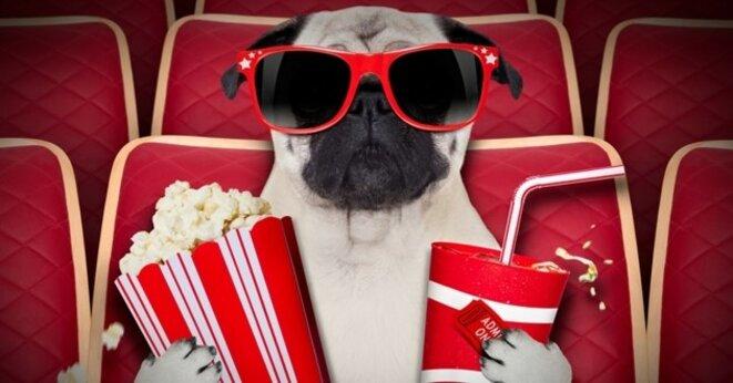 chien-cinema