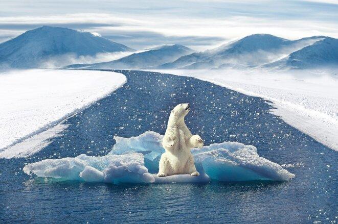 polar-bear-2750604-960-720
