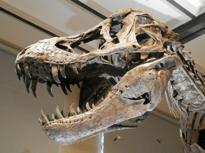 Dinosaure présumé - circa 200 millions d'années.