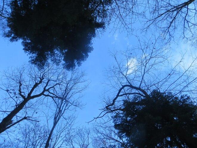 gros-arbres-ciel