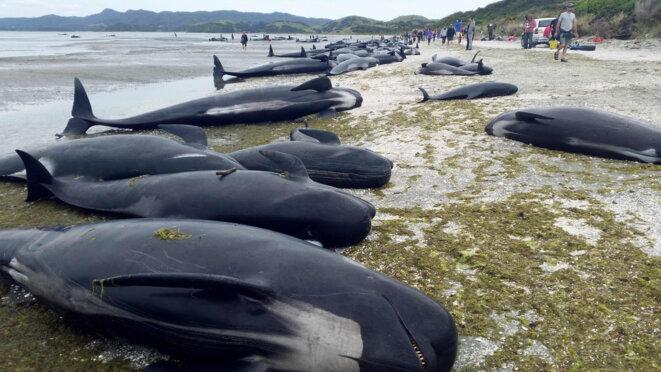 baleines-echouees