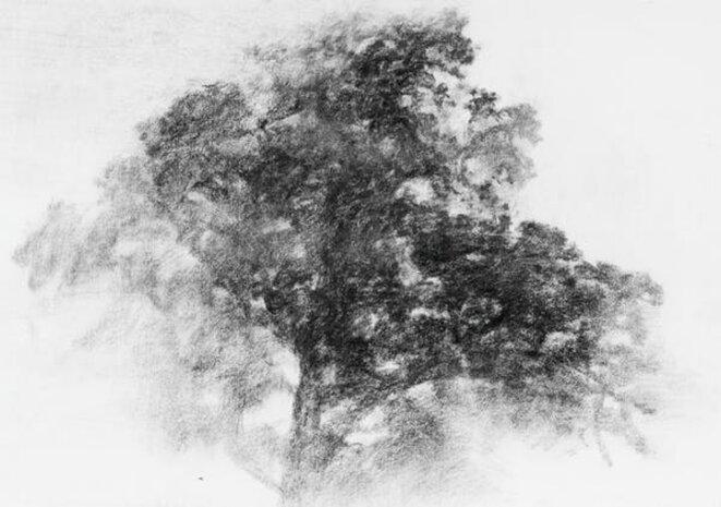 L'oiseau des vignes, chêne vert, fusain, 2016