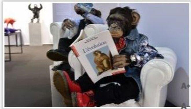 des-singes-en-train-de-lire