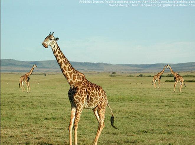 flying-girafes