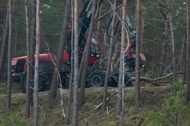 Abattage illégal de 25 hectares de forêt par le gouvernement nationaliste Droit et Justice © Polish Ecological Club