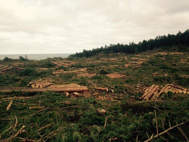 25 hectares de forêts abattus en quelques jours en Pologne © Polish Ecological Club