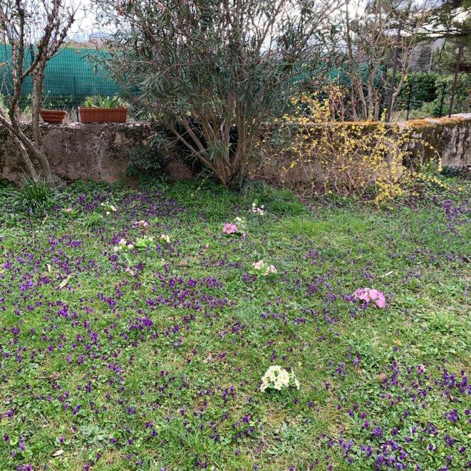 Les violettes du jardin © ET