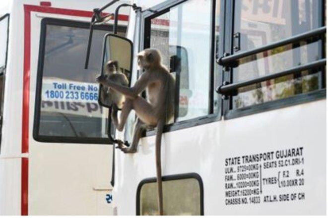 un-singe-qui-se-regarde-dans-un-miroir